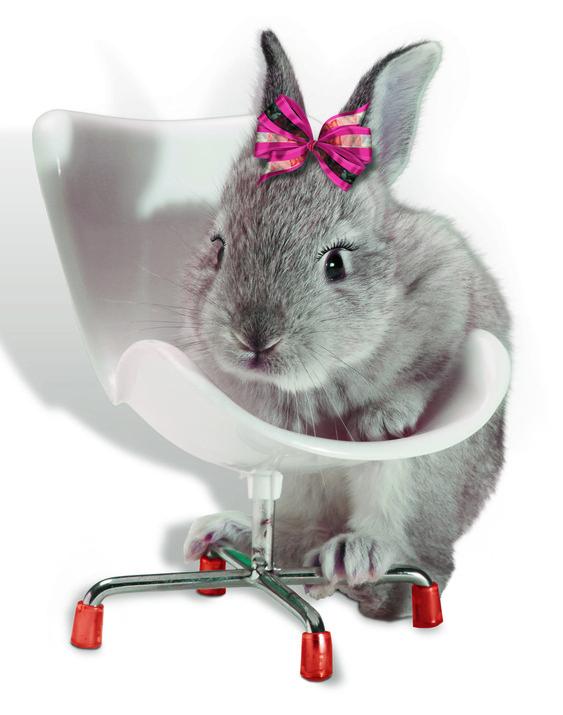 photo editing animal chair